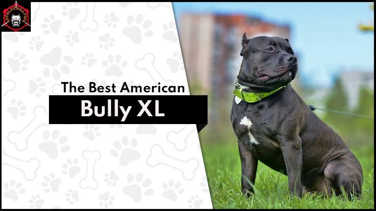 The Best American Bully XL and Pitbull Puppies