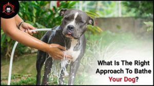 What Is The Right Approach To Bathe Your Dog?